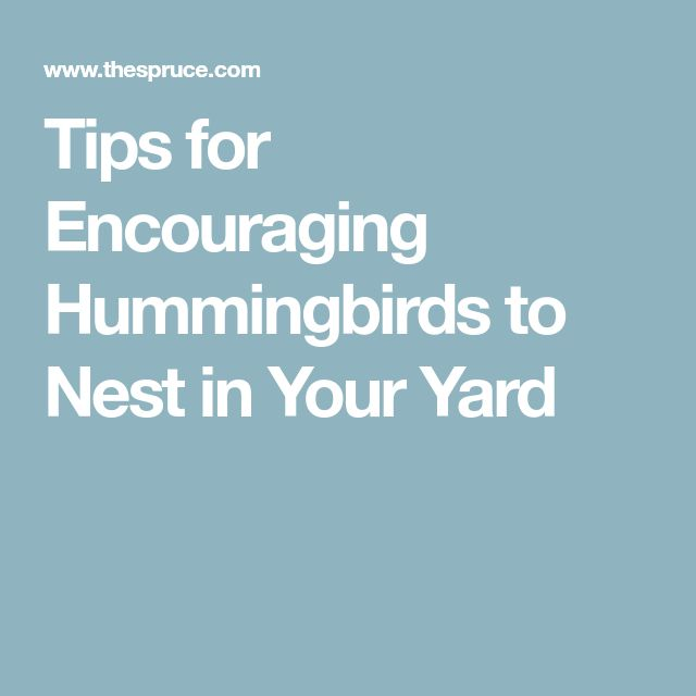 Tips for Encouraging Hummingbirds to Nest in Your Yard