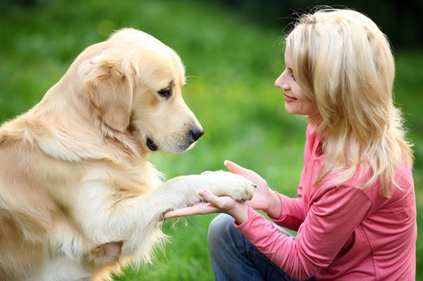 A lot of people love dogs. For those who want to make a profession or career out of it, it helps to know that you can turn your love of these friendly pets into a career.