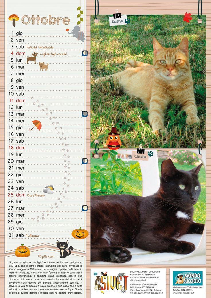 #calendar #october #cats #calendario #ottobre #gatti