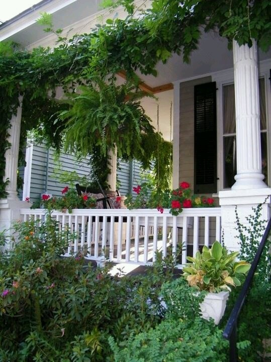 38 Homes That Turned Their Front Lawns Into Beautiful: 1000+ Images About Frilley Ferns On Pinterest