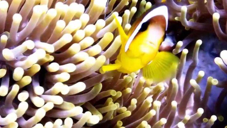 Vörös-tenger csodás élővilága 2014