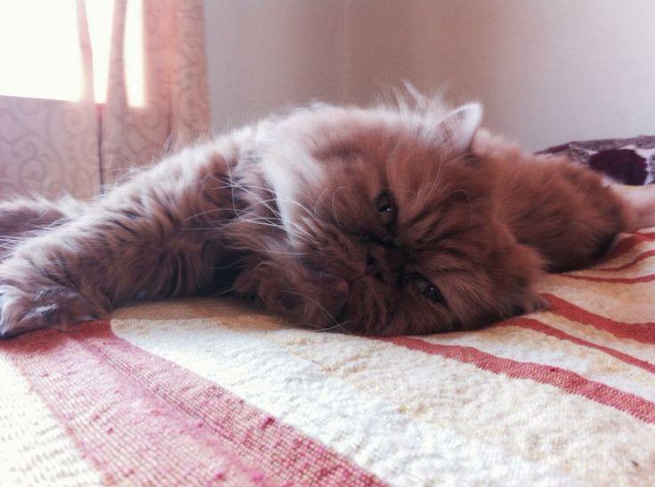 Cat, mi gato mateo