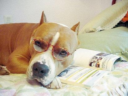 Inteligencia canina: ¿cuestión de raza? | Cuidar de tu mascota es facilisimo.com