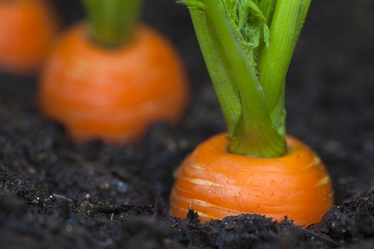 [Votre jardin fertile]  Ce que je vais vous partager aujourd'hui est une métaphore pour ce qui est du processus de création.  C'est un bon exemple qui clarifie la réalisation des désirs au mieux.   Là est la question...   Si vous deviez planter une graine dans le sol, que feriez-vous après tout?  Je sais ce que vous pensez... ;)  Vous vous dites sûrement: « Eh bien, c'est évident! »  Alors, que feriez-vous ?  [cliquez sur le lien ci-bas pour lire la suite de l'article...]