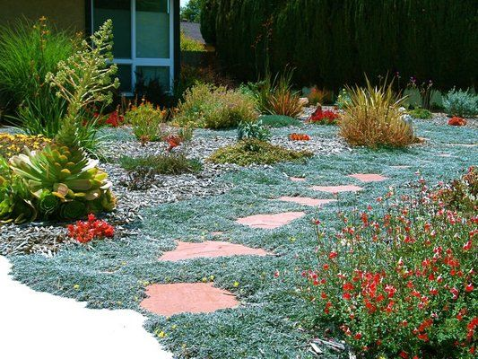 1000 ideas about sedum ground cover on pinterest ground for Low maintenance ground cover ideas