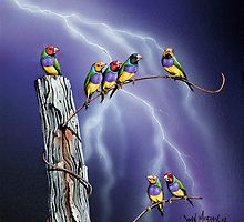 Gouldian finches- John Murray