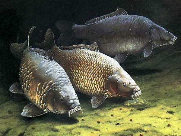 La pêche - Esox lucius ou… - Le poisson-chat et… - Le Black-bass - La carpe - Le chevensne - Colonie-Fourmis