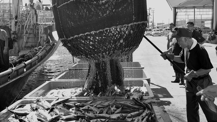 朝獲れの魚が、昼には缶詰に?鮮度にかける木の屋の情熱|STORY|木の屋石巻水産