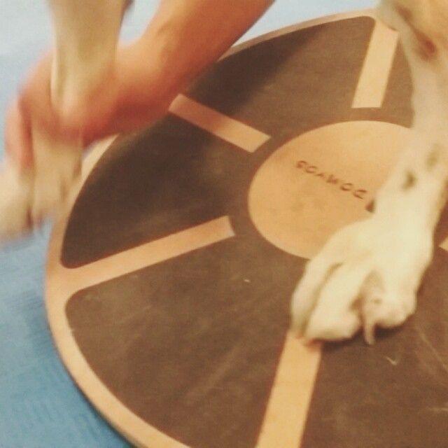 Exercicio de equilibrio www.fisiospa.pt
