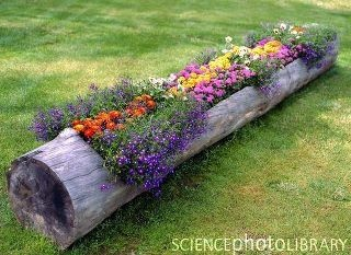 planter: Trees Trunks, Flower Planters, Yard, Great Idea, Gardens Idea, Outdoor, Flower Gardens, Flower Beds, Logs Planters