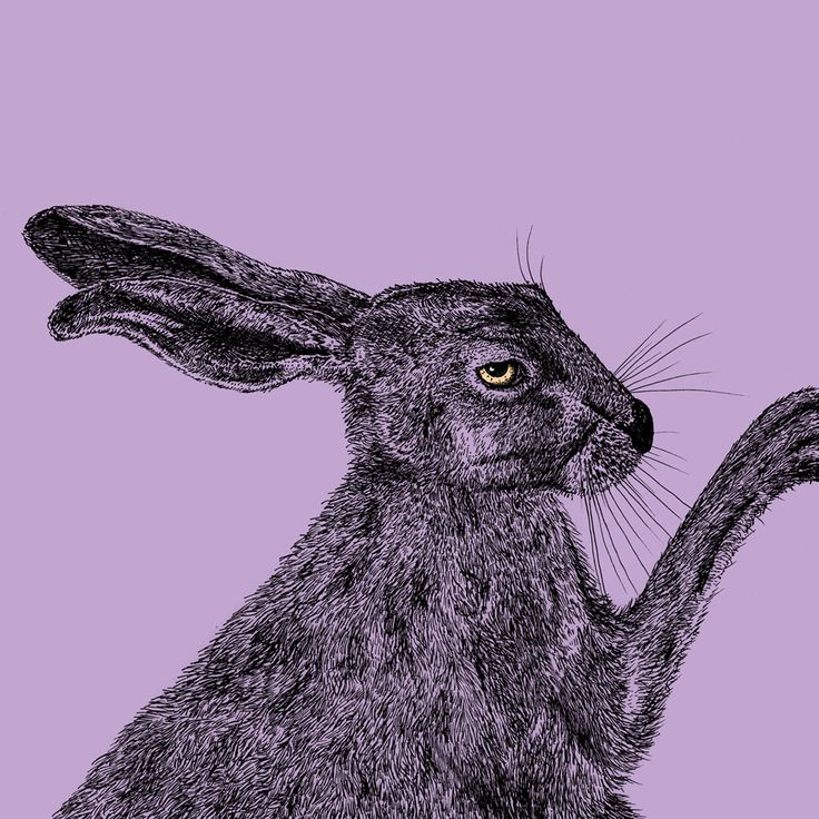 "Jenna Kunnas, ""Animal"" book illustration for Otava, 2017"