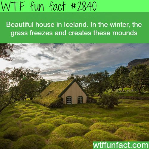 house in Iceland - WTF fun facts