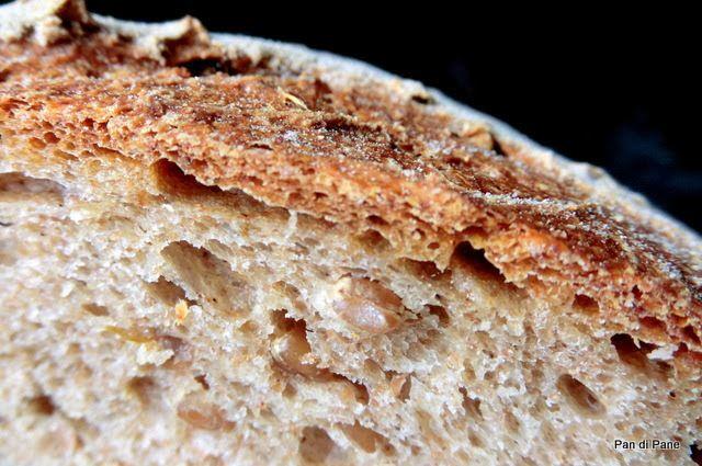 Pan di Pane: Ricetta Pane Integrale con grano germogliato e Pas...