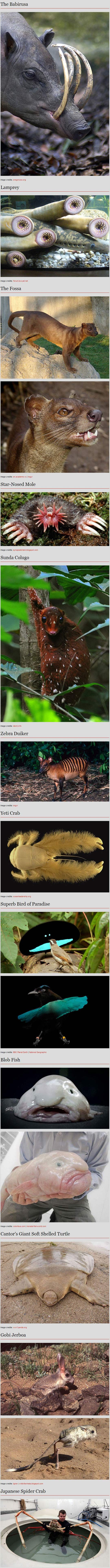 Very strange animals…Some of these are kind of scary