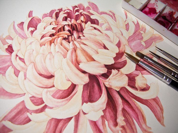 watercolor paintings of chrysanthemums | The red mixes were Permanent Rose, Opera Rose, Quinacridone Red ...
