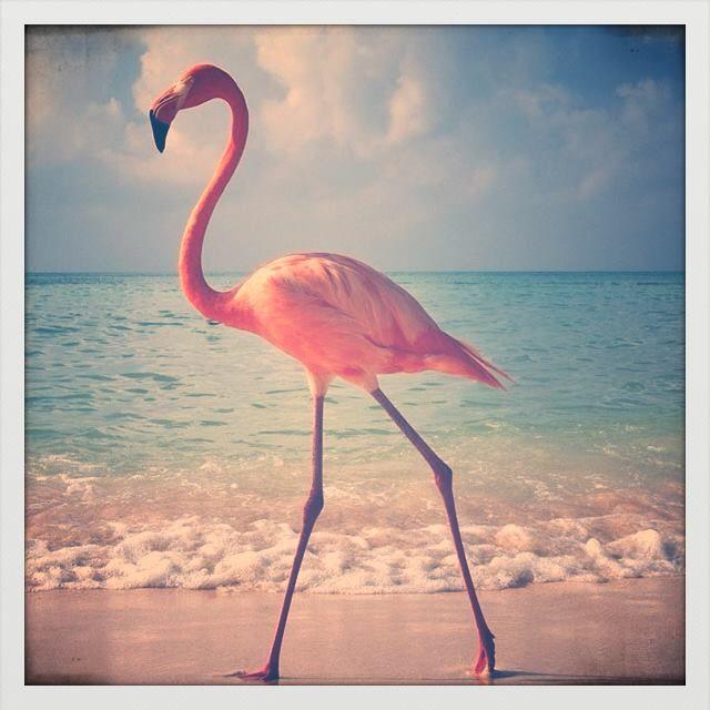 Stroll on the beach !!