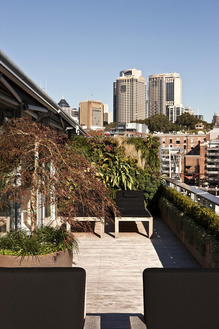 Balcony Garden  Walsh Bay, NSW Australia Anthony Wyer + Associates www.anthonywyer.com