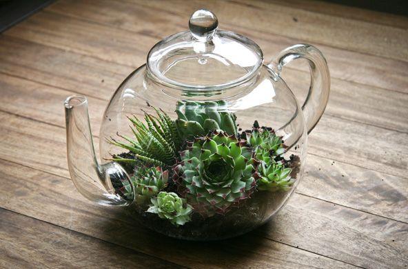 Succulenten in glazen theepot