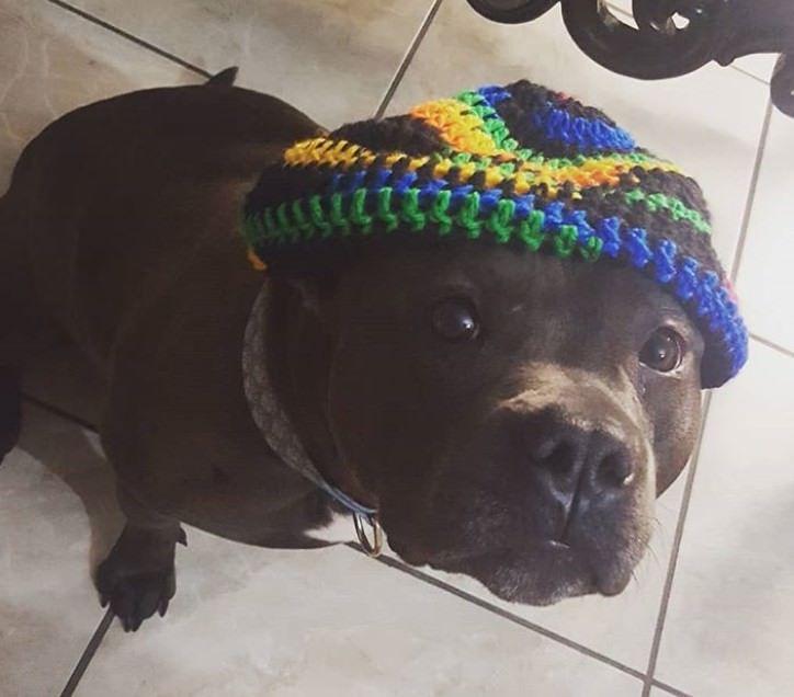 290 Hippie Dog Names Dog Names Crochet Dog Hat Dogs