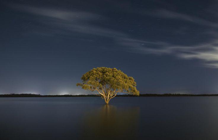 Brighton Tree by Liam Warton on 500px