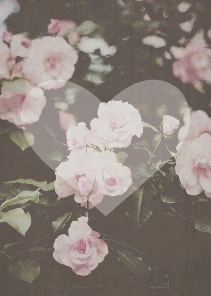 flowers blooming wallpapers