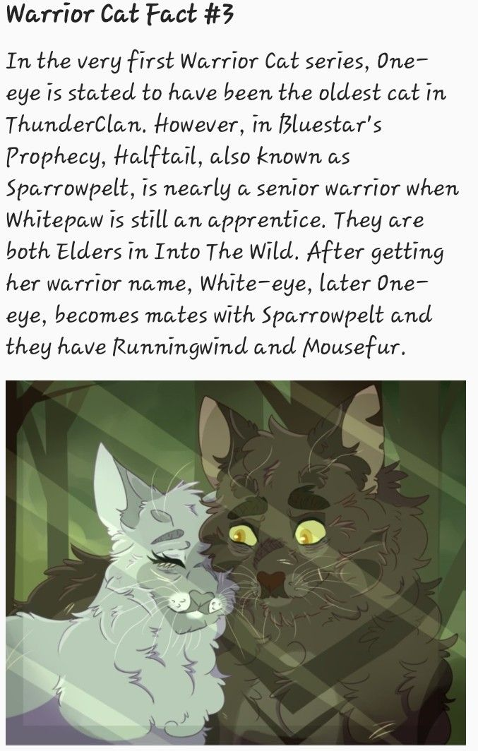 Pin by Puppens101 (Marisa) on Cinderpelt + Warrior Cats