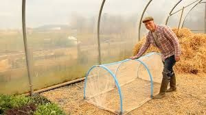 Make lightweight/portable Mini Polytunnels (some that can be dismantelsd & some permanent) to protect strawberries(with Netting). Also some with greenhouse plastic for extending growing season. Also to protect young plants from cabbage moth etc. Lightweight electrical conduit & re-bar?? Large hoop house can be rain shelter for chickens during the day & extra run in the winter.