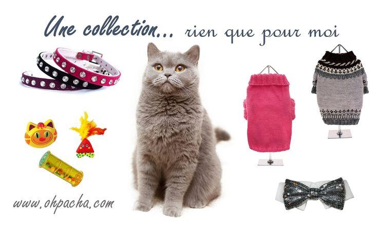 Chez Oh ! Pacha on pense aux chats! Retrouvez tous ces articles dans notre boutique chat : http://www.ohpacha.com/26-boutique-pour-chat-accessoires