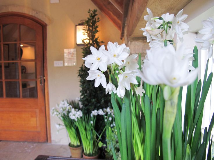 The heady scent of narcissi greets guests at the entrance to Calcot Manor Hotel, Spa & Restaurants in the Cotswolds, England http://www.calcotmanor.co.uk/
