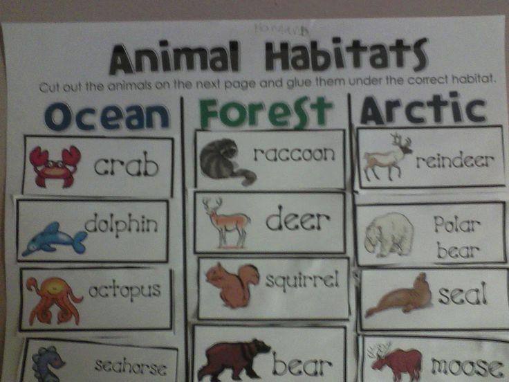 Miss. Llewellyn's Kindergarten: Animal Habitats- sort