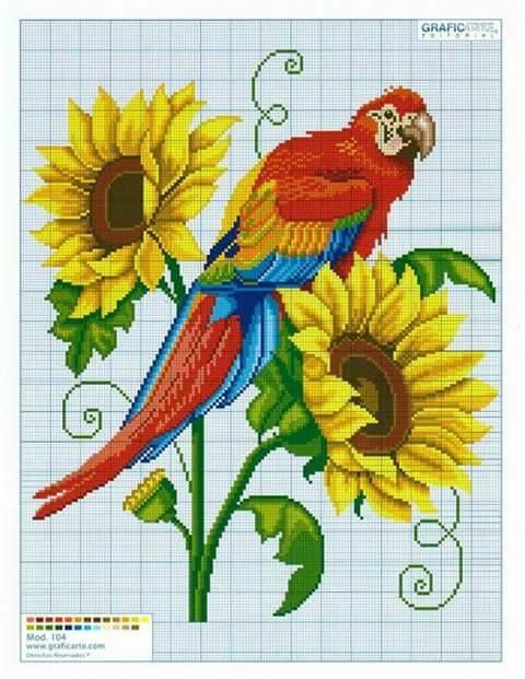 Bird parrot and a sunflower cross stitch.