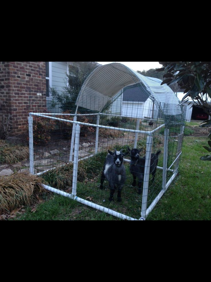 56 best repurpose an old trampoline images on pinterest - Mobile craigslist farm and garden ...