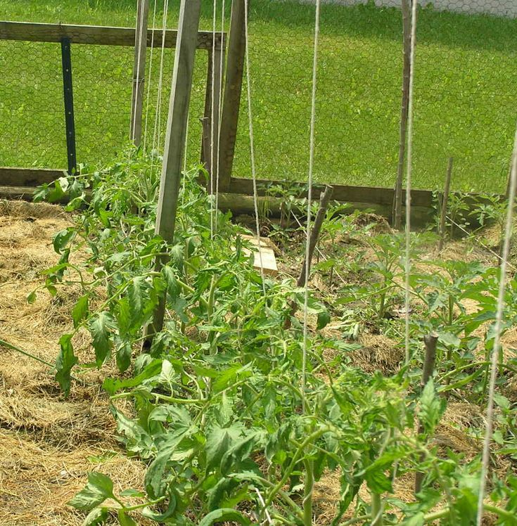 Tomato Supports in Your Small Kitchen Garden   Your Small Kitchen Garden