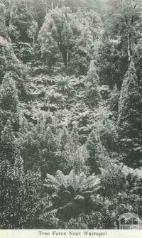 Near Warragul