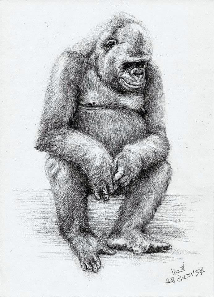 A shy gorilla