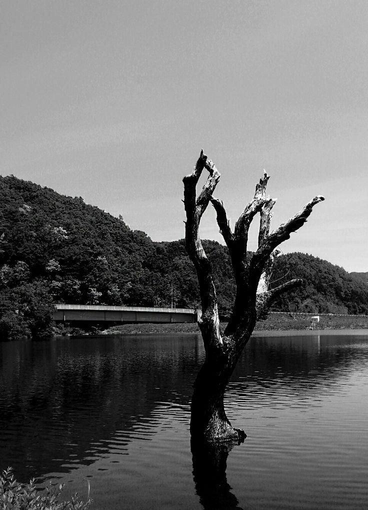 하늘물빛정원에서 고독한나무