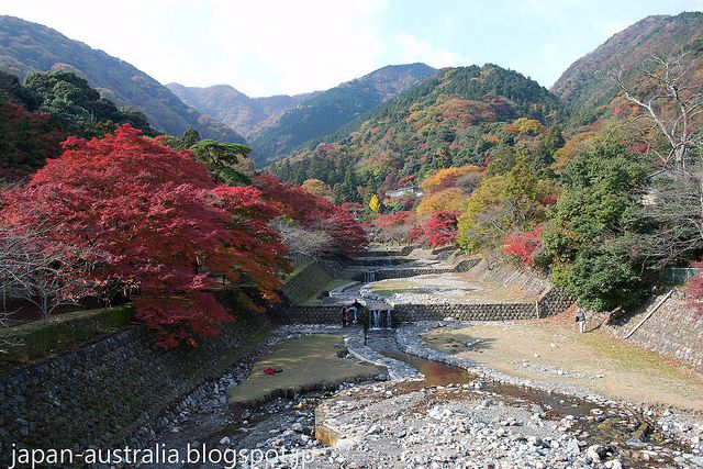 Beautiful Autumn Colours at Yoro Park in Gifu. The mountains surrounding the park are stunning this time of the year and many people visit the park to see the changing leaves or Koyo (紅葉) in Japanese. This shot was taken back on November 24th 2013 when the colours were at their peak.