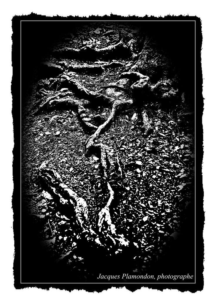 Roots, Mont St-Hilaire, Qc Canada