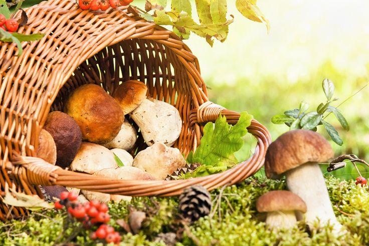 Byliście już w tym roku na grzybach? http://www.fototapeta24.pl/ #grzyby #grzybobranie #jesień #fototapeta #fototapeta24pl