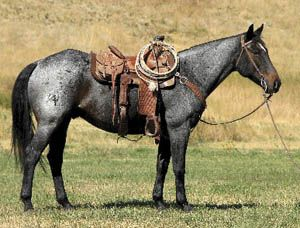 "Power Dell (""L'Amour"") a 2001 AQHA blue roan gelding"