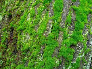 Sanatate cu pofta de viata: Primele plante de pe Terra au declansat inceputul ...