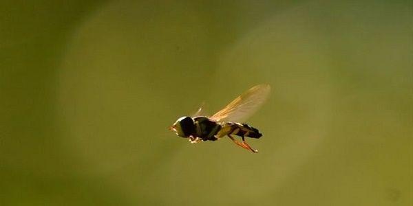 Η κλιματική αλλαγή ωθεί τα έντομα στον δρόμο της προσφυγιάς