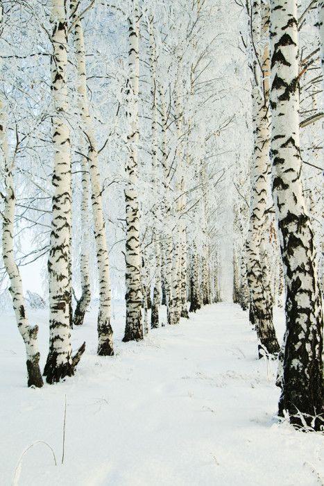 Beautiful Winter Outfit Www Pinterest Com: 17 Best Ideas About Winter Trees On Pinterest