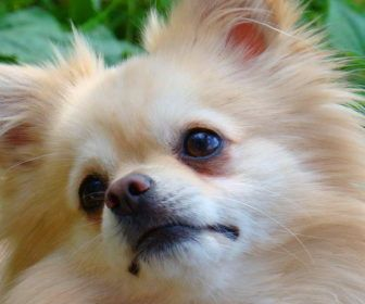 Best Cute Puppy Names For Pomeranian Best Cute Puppy Names Dogs