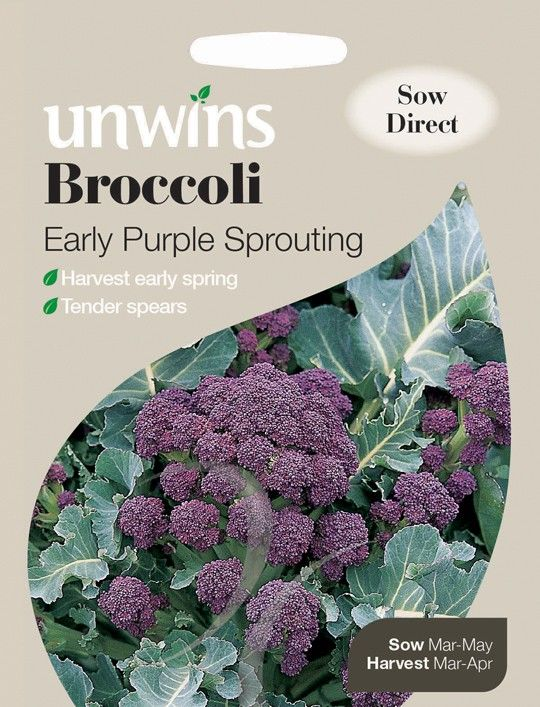 Buy Broccoli Early Purple Sprouting - Seeds online   Unwins