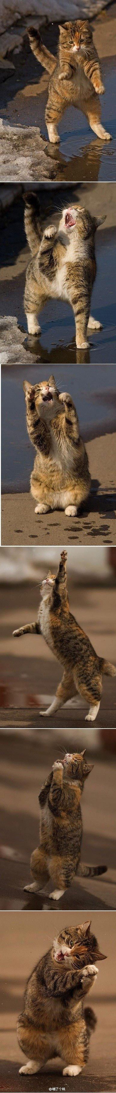 Kitty has got all the right moves! So true !