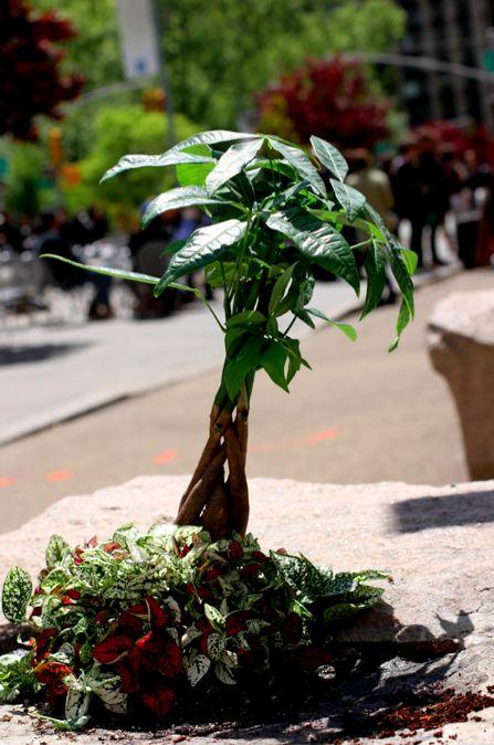 Pothole Garden New York City Steve Wheen http://restreet.altervista.org/steve-wheen-ripara-le-buche-stradali-con-mini-giardini/