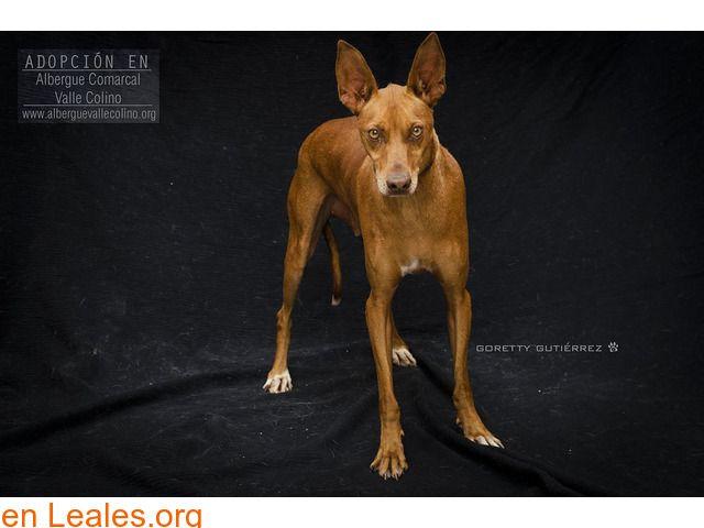 Perros En Adopción España Santa Cruz De Tenerife Tenerife Perros En Adopcion Perros Fotos De Animales