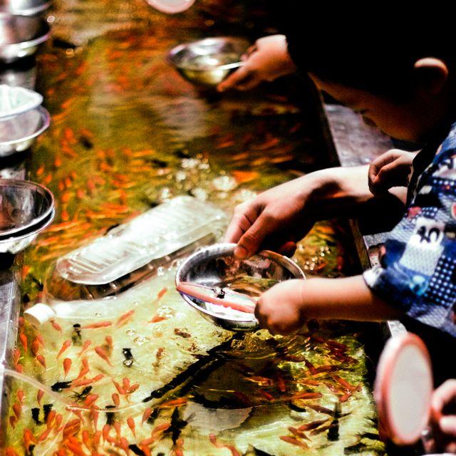 金魚すくい the fish catching game at summer festivals