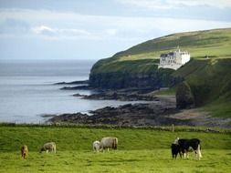 Ierse en Schotse folklore Wind, Water & Whiskey - zo 7 jan